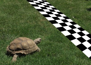 Turtle-crossing-finish-line-cropped
